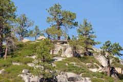 Árboles en la ladera Imagen de archivo
