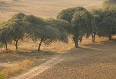 Árboles en la mañana Imagenes de archivo