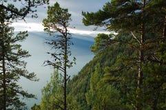 Árboles en la montaña de Sognefjord, Noruega Imagen de archivo libre de regalías