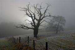 Árboles en la niebla Imagenes de archivo