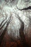Árboles en la niebla Imagen de archivo libre de regalías