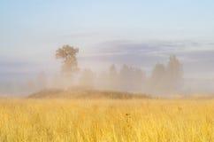 Árboles en la niebla Imágenes de archivo libres de regalías