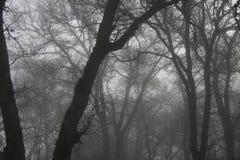 Árboles en la niebla Foto de archivo libre de regalías