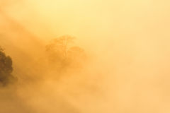 Árboles en la niebla con la luz de oro. Fotografía de archivo
