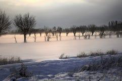 Árboles en la nieve Fotos de archivo libres de regalías