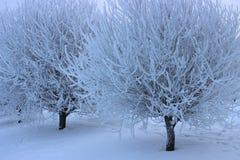 Árboles en la nieve Imagenes de archivo