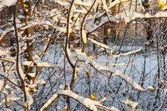 Árboles en la nieve Foto de archivo libre de regalías