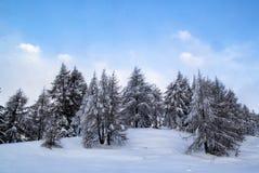 Árboles en la nieve imagen de archivo