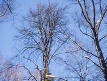 Árboles en la nieve contra el cielo azul Fotos de archivo libres de regalías