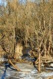 árboles en la nieve deshelada Foto de archivo libre de regalías