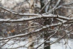 Árboles en la nieve en diciembre en un parque en Moscú Fotos de archivo