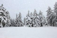 Árboles en la nieve en el bosque en invierno Fotografía de archivo libre de regalías