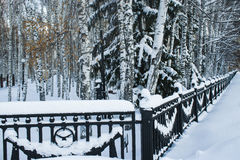 Árboles en la nieve en el parque Foto de archivo libre de regalías