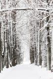 Árboles en la nieve en un día de invierno Fotos de archivo