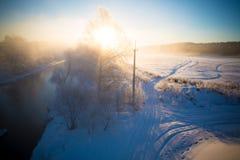 Árboles en la nieve en una mañana escarchada del invierno imagenes de archivo
