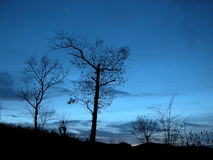 Árboles en la noche Foto de archivo libre de regalías