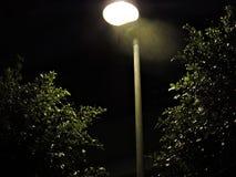 Árboles en la noche Imágenes de archivo libres de regalías