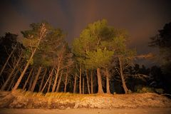 Árboles en la noche Fotos de archivo libres de regalías