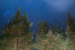 Árboles en la noche Fotografía de archivo libre de regalías