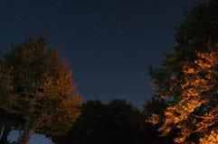 Árboles en la noche con las estrellas Fotografía de archivo libre de regalías
