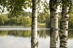 Árboles en la orilla Imagen de archivo libre de regalías