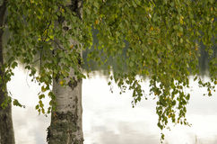 Árboles en la orilla Imágenes de archivo libres de regalías
