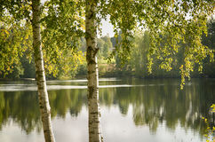 Árboles en la orilla Fotografía de archivo