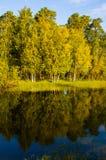 Árboles en la orilla Fotos de archivo libres de regalías