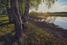 Árboles en la orilla fotos de archivo