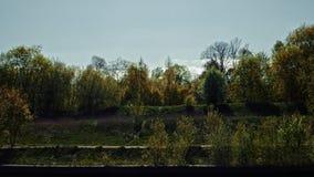 Árboles en la orilla del canal de Moscú metrajes