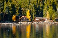 Árboles en la orilla del lago Fotografía de archivo libre de regalías
