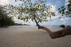 Árboles en la playa Fotografía de archivo libre de regalías
