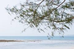 Árboles en la playa del nai yang en Tailandia fotografía de archivo libre de regalías