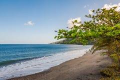 Árboles en la playa, Grenada, del Caribe imagen de archivo libre de regalías