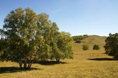 Árboles en la pradera Fotografía de archivo