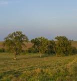 Árboles en la pradera Neal Smith Wildlife Refuge Fotografía de archivo libre de regalías