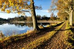 Árboles en la presa Foto de archivo libre de regalías