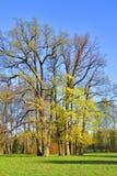 Árboles en la primavera Fotos de archivo libres de regalías