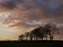 Árboles en la puesta del sol Fotos de archivo libres de regalías