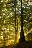 Árboles en la puesta del sol Imagen de archivo libre de regalías