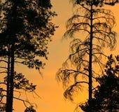 Árboles en la puesta del sol Foto de archivo libre de regalías