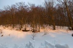 Árboles en la puesta del sol Foto de archivo