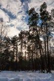 Árboles en la puesta del sol en invierno Fotos de archivo libres de regalías
