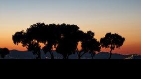 Árboles en la puesta del sol en la sombra Imagen de archivo