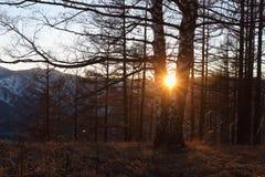 Árboles en la puesta del sol entre las montañas en la caída Imagen de archivo