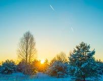 Árboles en la puesta del sol y el cielo en invierno Fotografía de archivo libre de regalías