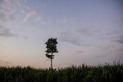 Árboles en la pulpa de madera Foto de archivo