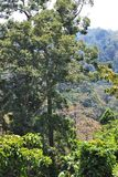 Árboles en la selva tropical Fotos de archivo libres de regalías
