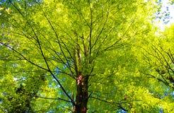 Árboles en la trayectoria de bosque Fotos de archivo libres de regalías