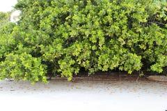 Árboles en la tribulación del cabo Fotografía de archivo libre de regalías
